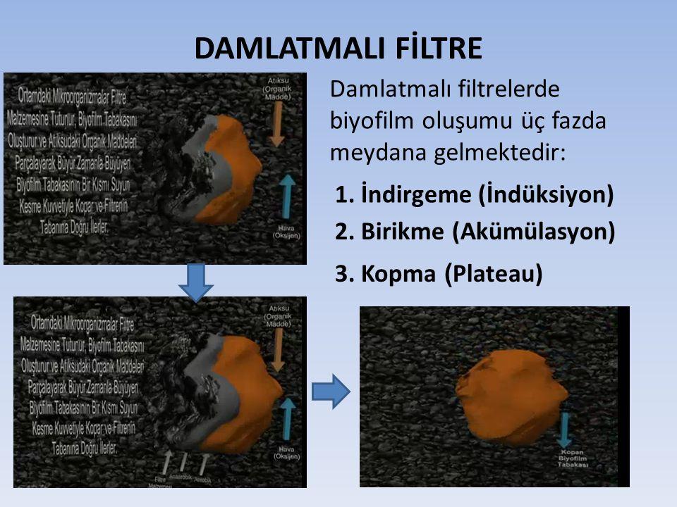 DAMLATMALI FİLTRE Damlatmalı filtrelerde biyofilm oluşumu üç fazda meydana gelmektedir: 1. İndirgeme (İndüksiyon)