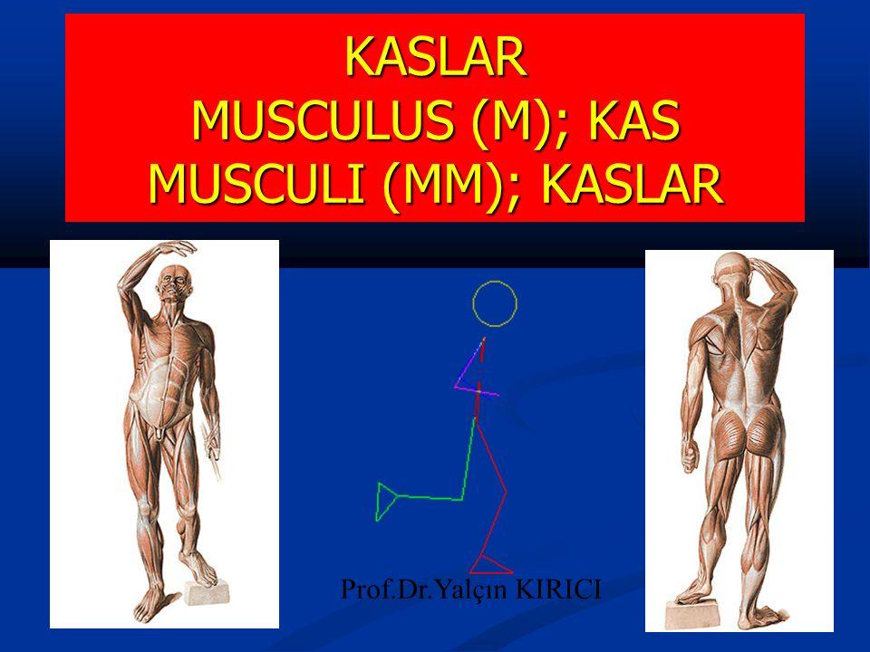KASLAR MUSCULUS (M); KAS MUSCULI (MM); KASLAR