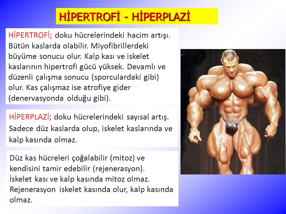 HİPERTROFİ - HİPERPLAZİ