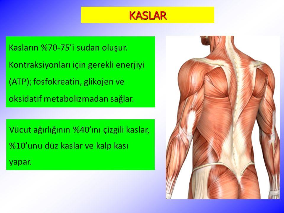 KASLAR Kasların %70-75'i sudan oluşur. Kontraksiyonları için gerekli enerjiyi (ATP); fosfokreatin, glikojen ve oksidatif metabolizmadan sağlar.