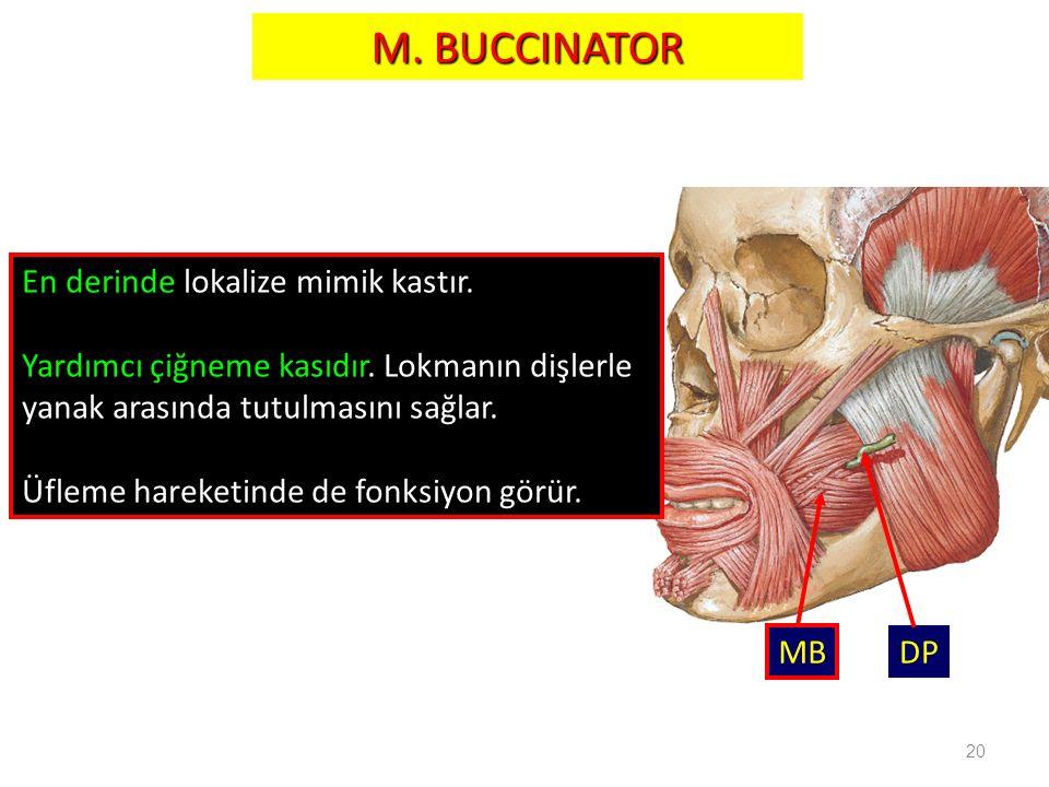 M. BUCCINATOR En derinde lokalize mimik kastır.
