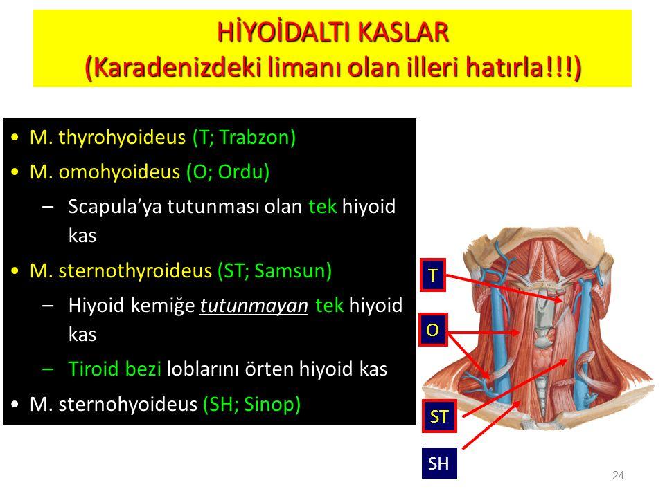 HİYOİDALTI KASLAR (Karadenizdeki limanı olan illeri hatırla!!!)