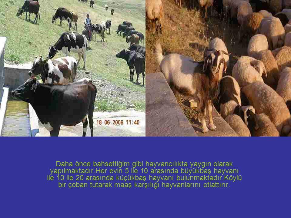 Daha önce bahsettiğim gibi hayvancılıkta yaygın olarak yapılmaktadır