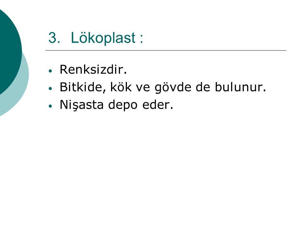 Lökoplast : Renksizdir. Bitkide, kök ve gövde de bulunur.