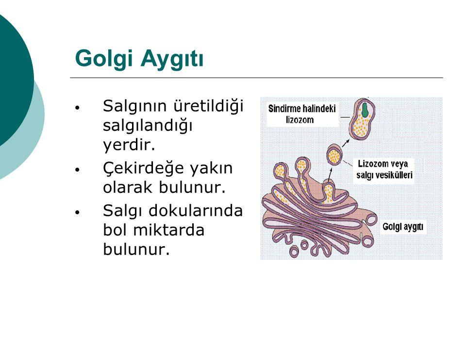 Golgi Aygıtı Salgının üretildiği salgılandığı yerdir.