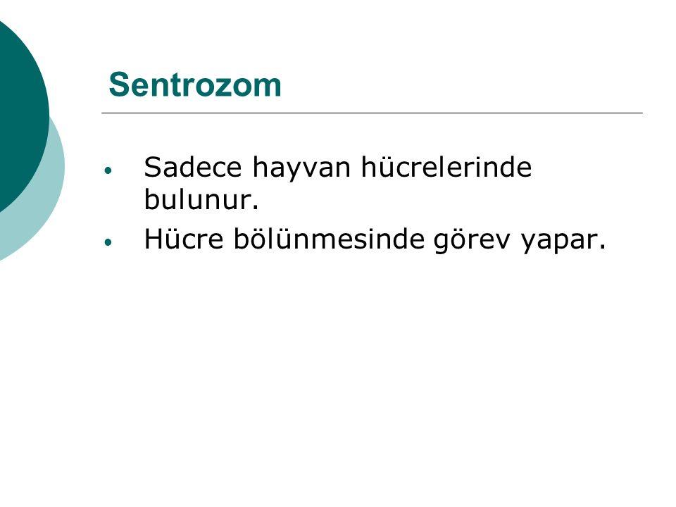 Sentrozom Sadece hayvan hücrelerinde bulunur.
