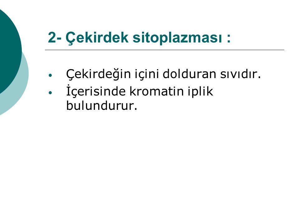 2- Çekirdek sitoplazması :