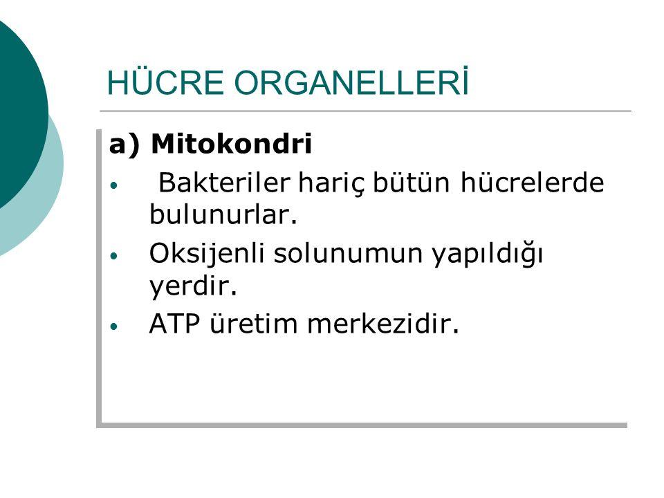 HÜCRE ORGANELLERİ a) Mitokondri