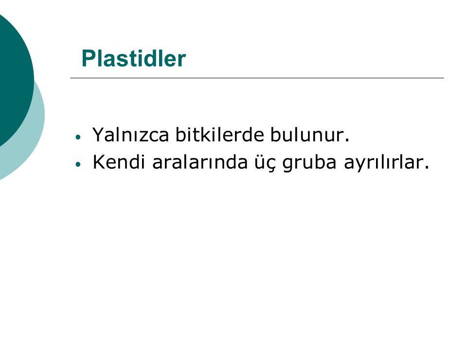 Plastidler Yalnızca bitkilerde bulunur.