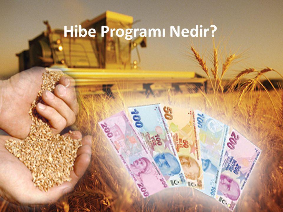 Hibe Programı Nedir