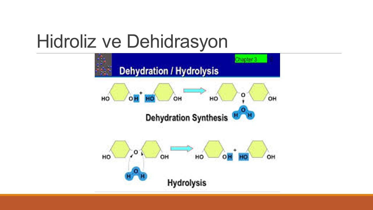 Hidroliz ve Dehidrasyon