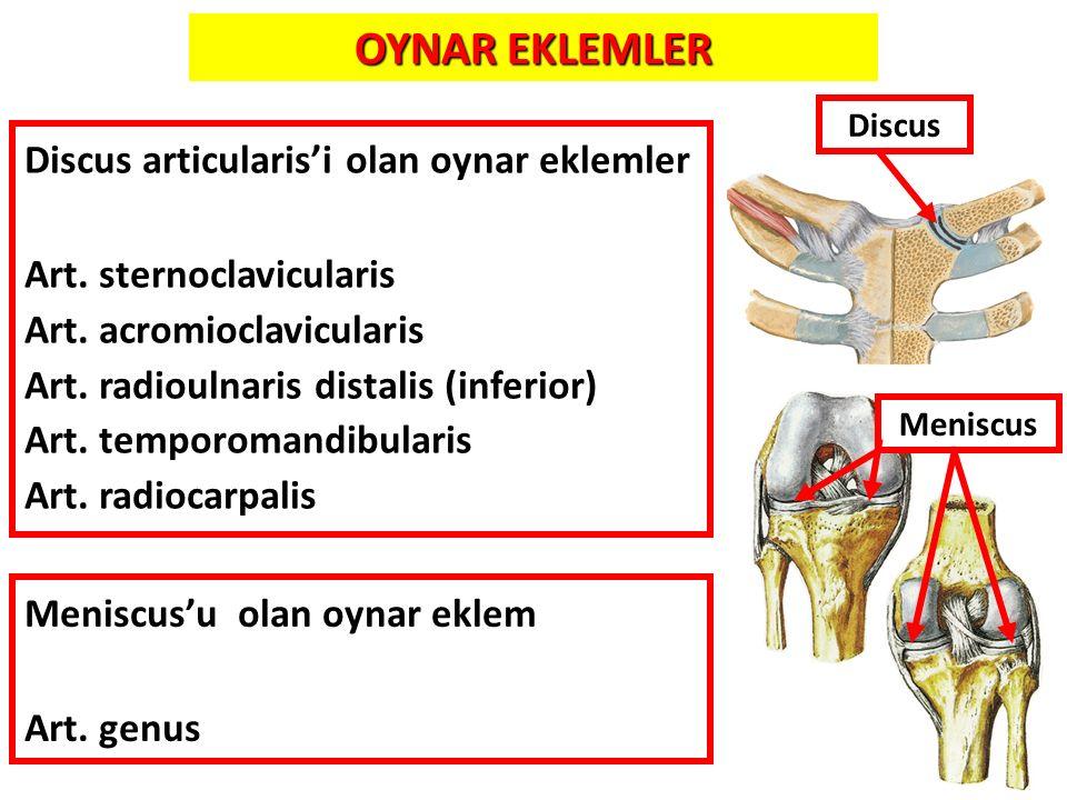 OYNAR EKLEMLER Discus articularis'i olan oynar eklemler
