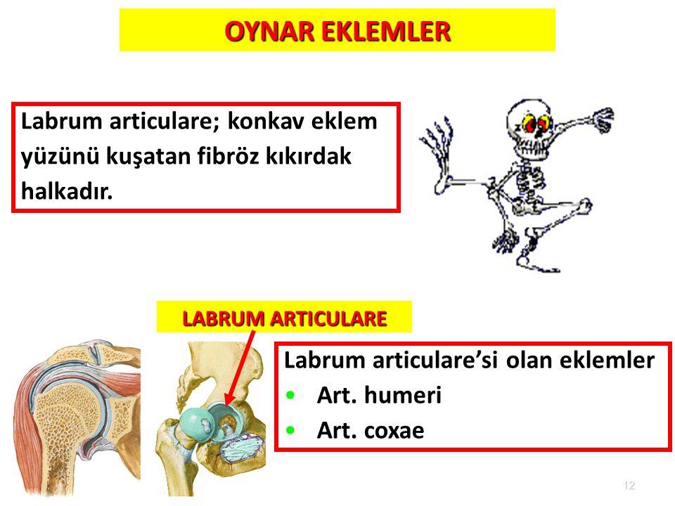 OYNAR EKLEMLER Labrum articulare; konkav eklem