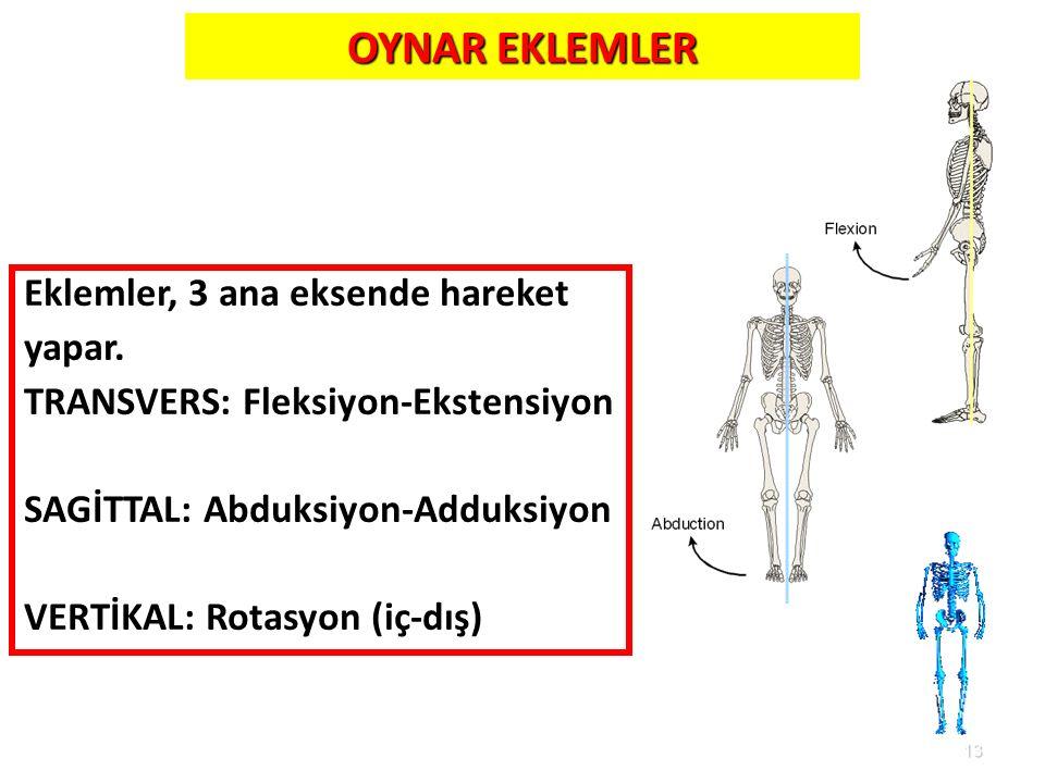 OYNAR EKLEMLER Eklemler, 3 ana eksende hareket yapar.