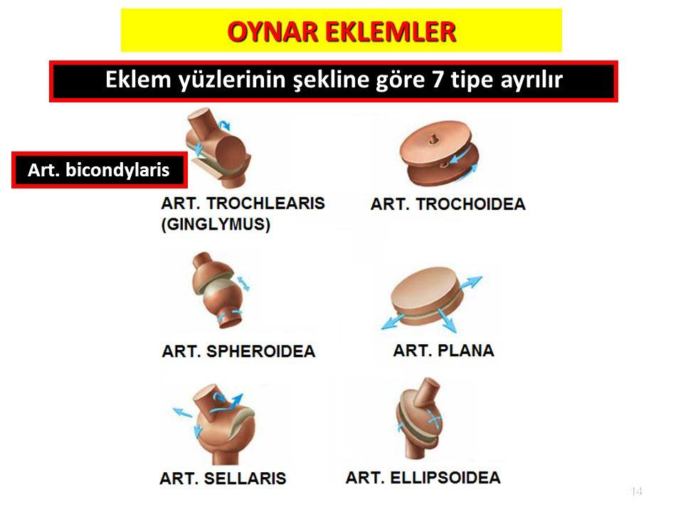 Eklem yüzlerinin şekline göre 7 tipe ayrılır
