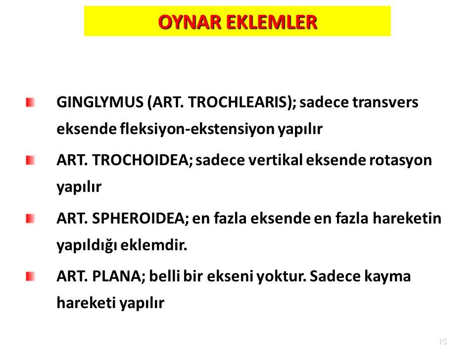 OYNAR EKLEMLER GINGLYMUS (ART. TROCHLEARIS); sadece transvers eksende fleksiyon-ekstensiyon yapılır.