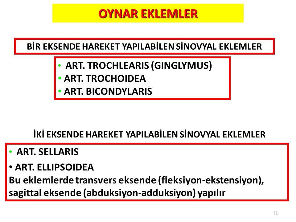 OYNAR EKLEMLER ART. TROCHOIDEA ART. BICONDYLARIS ART. ELLIPSOIDEA