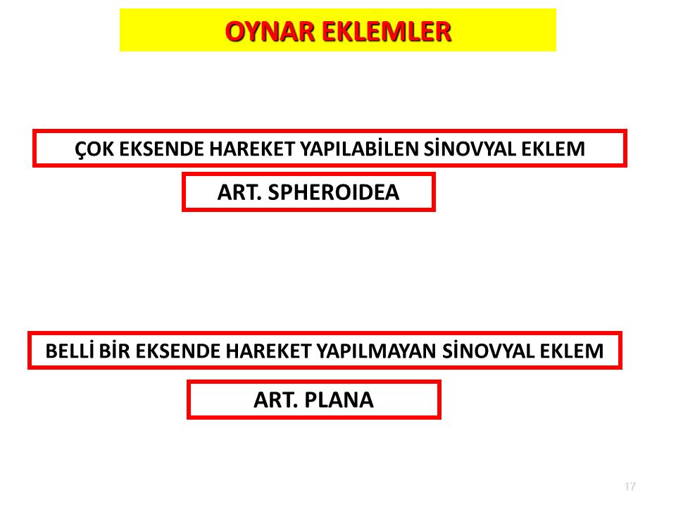 OYNAR EKLEMLER ART. SPHEROIDEA ART. PLANA