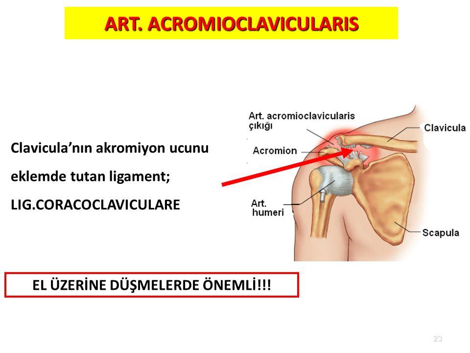 ART. ACROMIOCLAVICULARIS EL ÜZERİNE DÜŞMELERDE ÖNEMLİ!!!