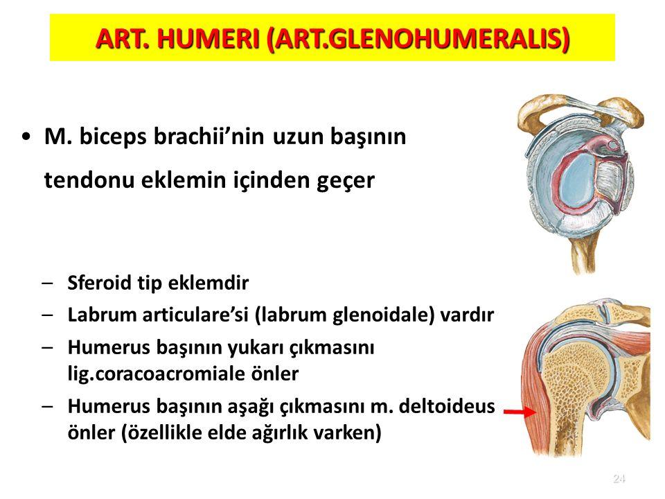 ART. HUMERI (ART.GLENOHUMERALIS)