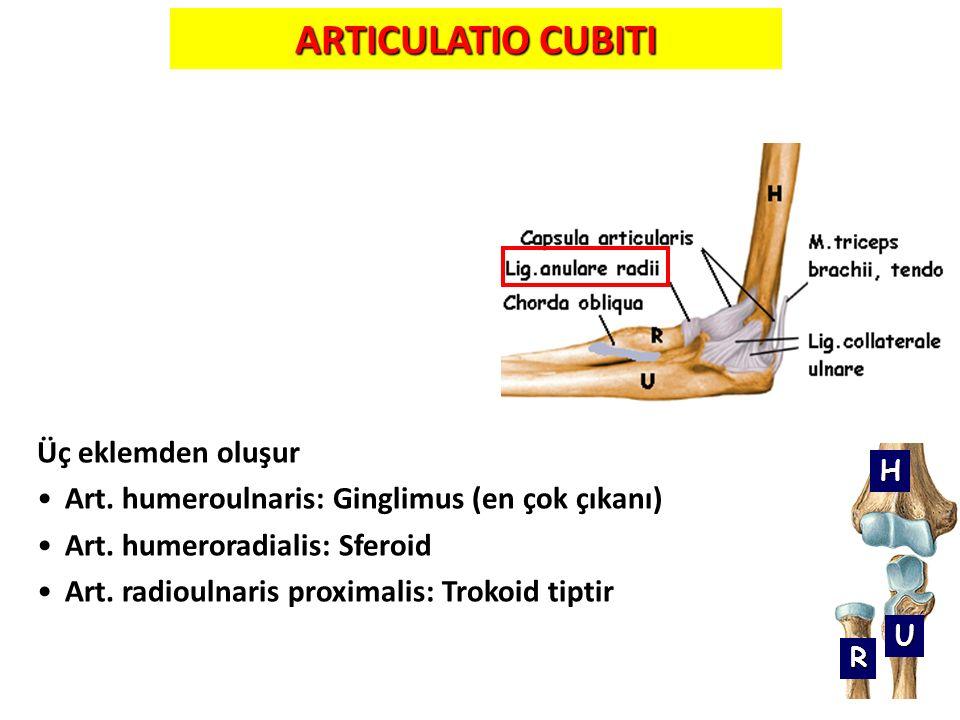 ARTICULATIO CUBITI Üç eklemden oluşur