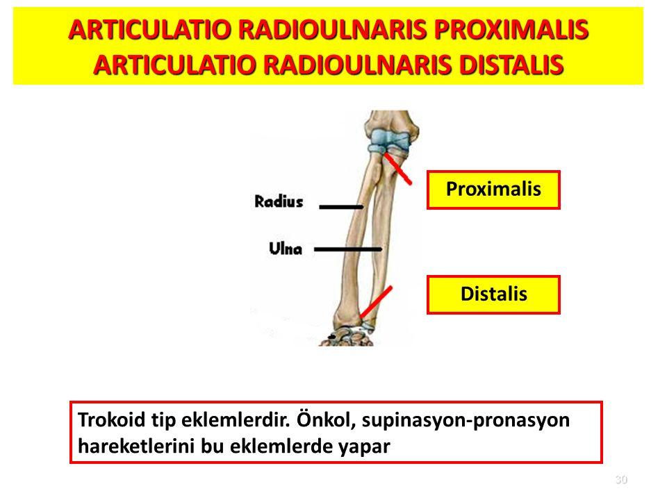 ARTICULATIO RADIOULNARIS PROXIMALIS ARTICULATIO RADIOULNARIS DISTALIS