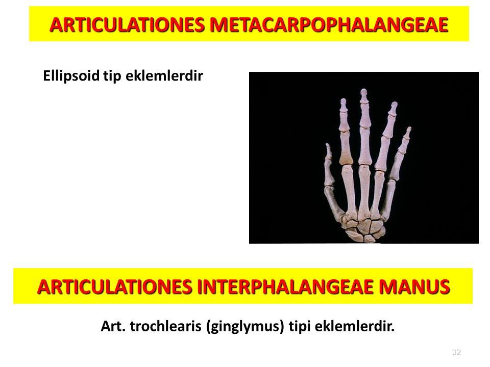 ARTICULATIONES METACARPOPHALANGEAE