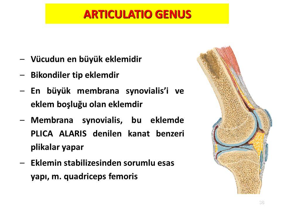 ARTICULATIO GENUS Vücudun en büyük eklemidir Bikondiler tip eklemdir