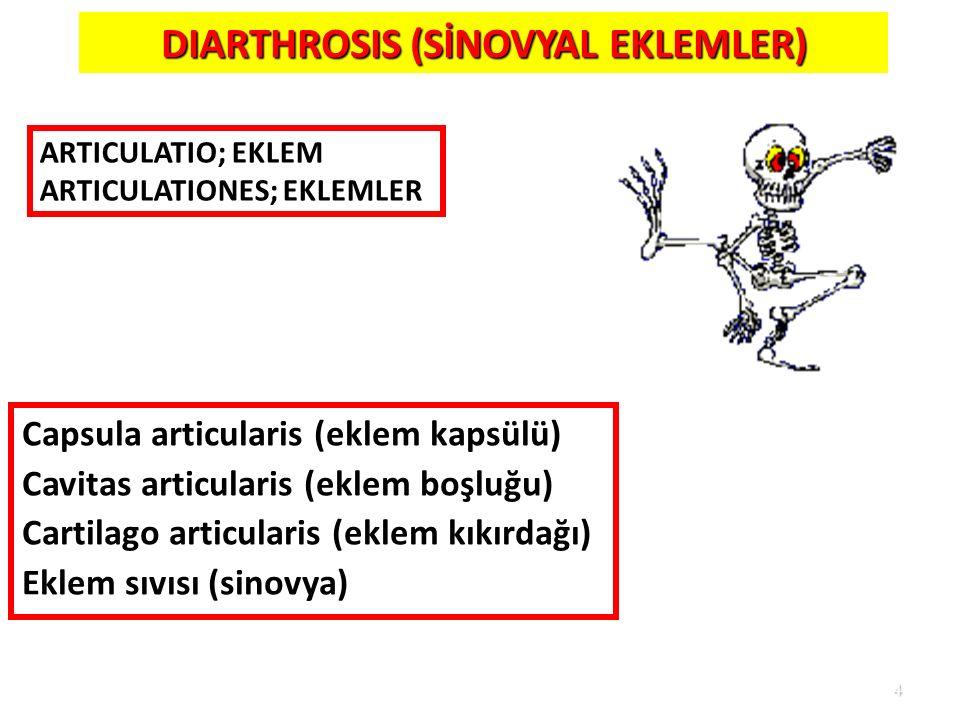 DIARTHROSIS (SİNOVYAL EKLEMLER)