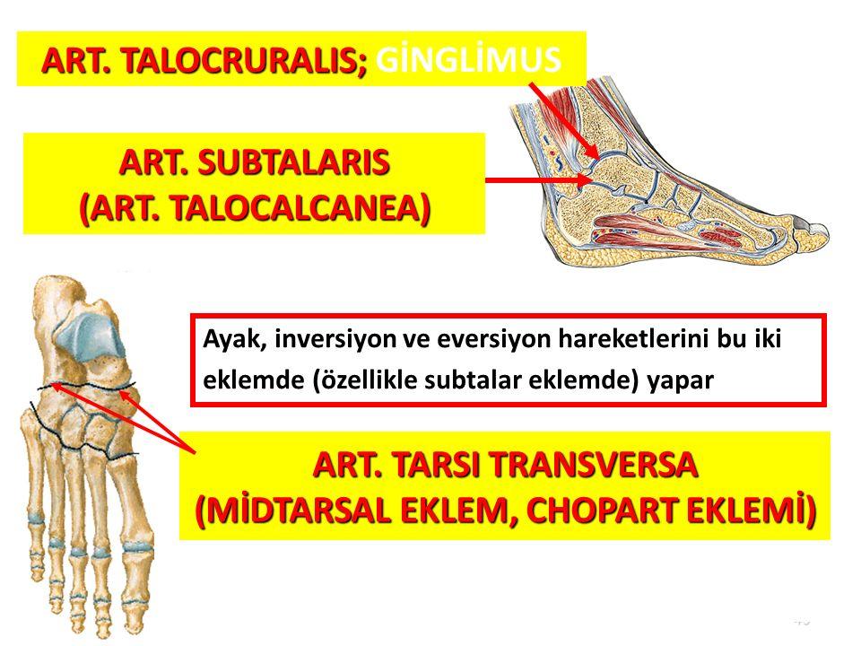 ART. TALOCRURALIS; GİNGLİMUS