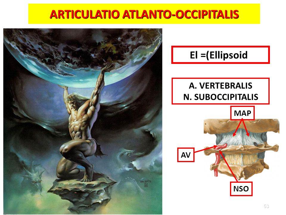 ARTICULATIO ATLANTO-OCCIPITALIS