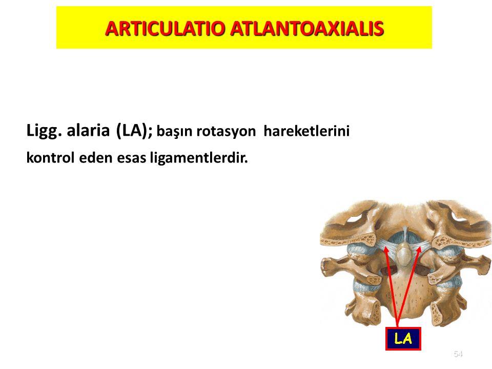 ARTICULATIO ATLANTOAXIALIS