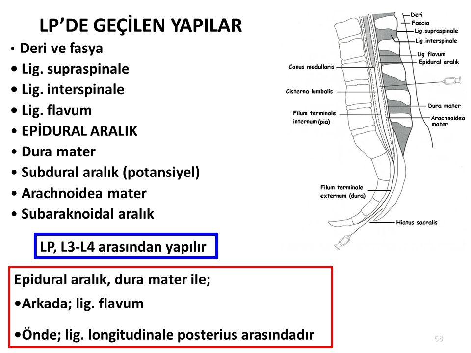 LP'DE GEÇİLEN YAPILAR • Lig. supraspinale • Lig. interspinale