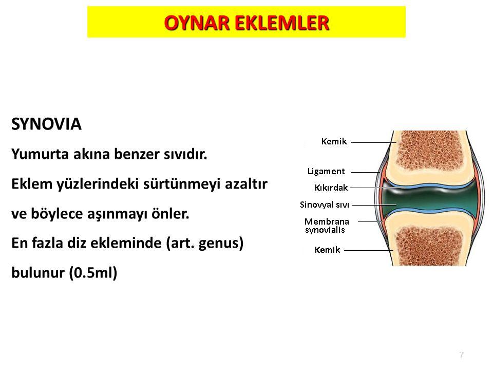OYNAR EKLEMLER SYNOVIA Yumurta akına benzer sıvıdır.