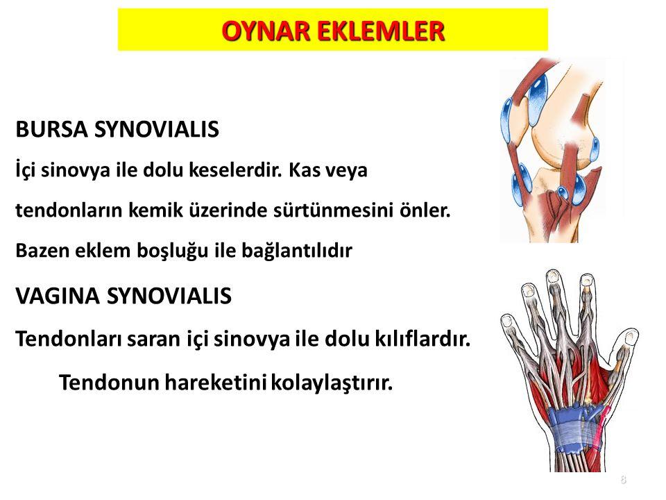 OYNAR EKLEMLER BURSA SYNOVIALIS VAGINA SYNOVIALIS