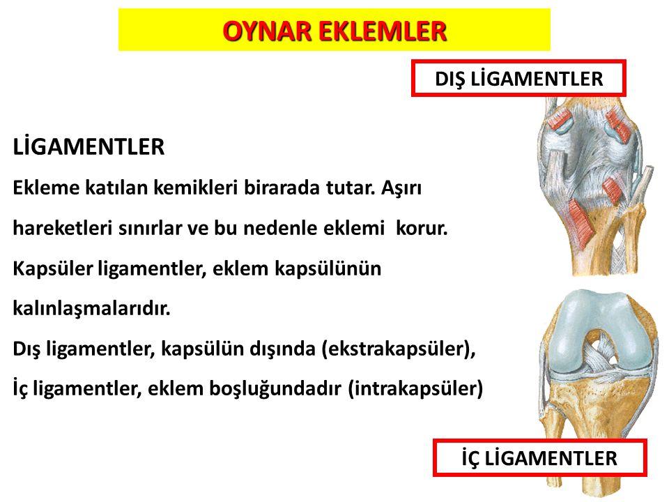 OYNAR EKLEMLER LİGAMENTLER DIŞ LİGAMENTLER