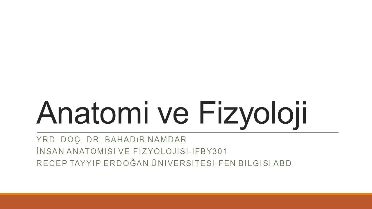 Anatomi ve Fizyoloji Yrd. Doç. Dr. Bahadır Namdar