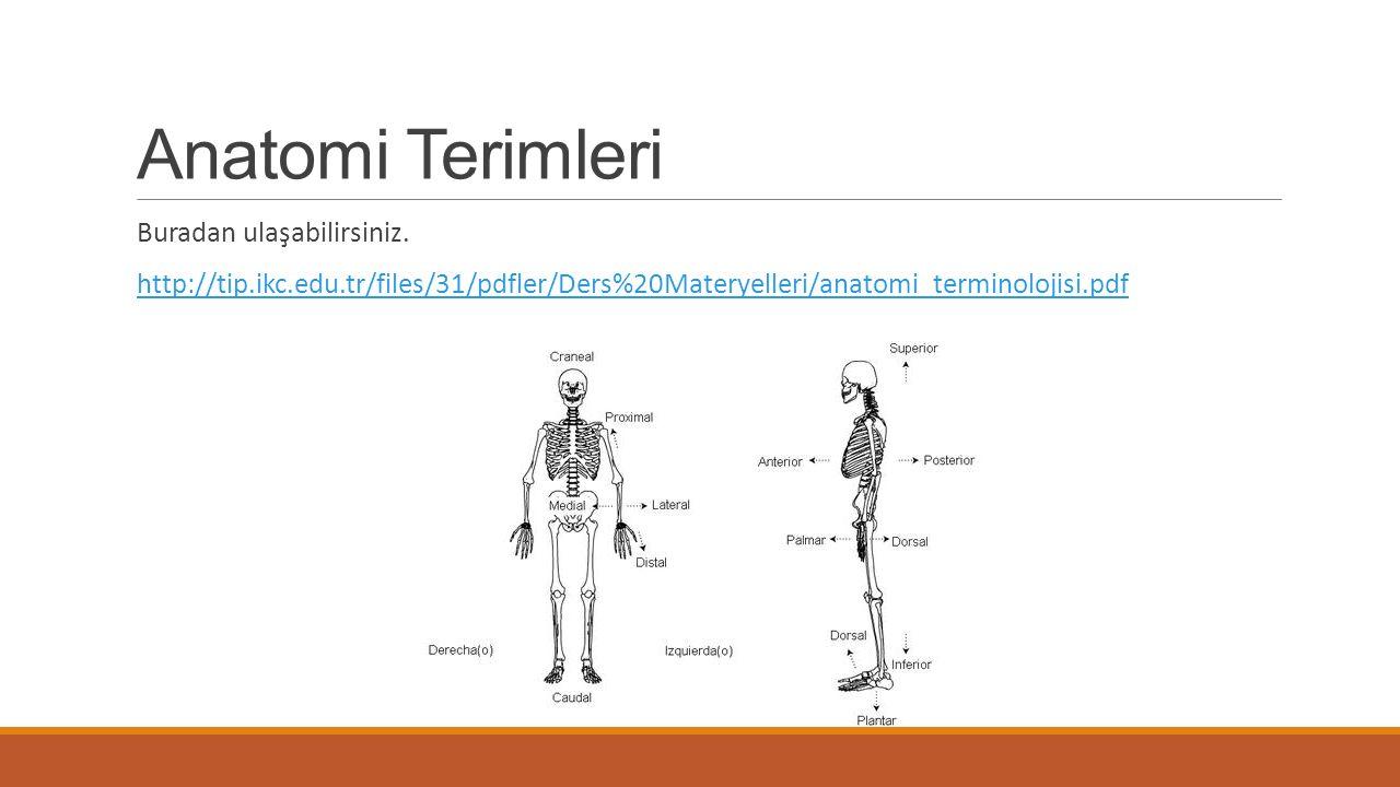 Anatomi Terimleri Buradan ulaşabilirsiniz.