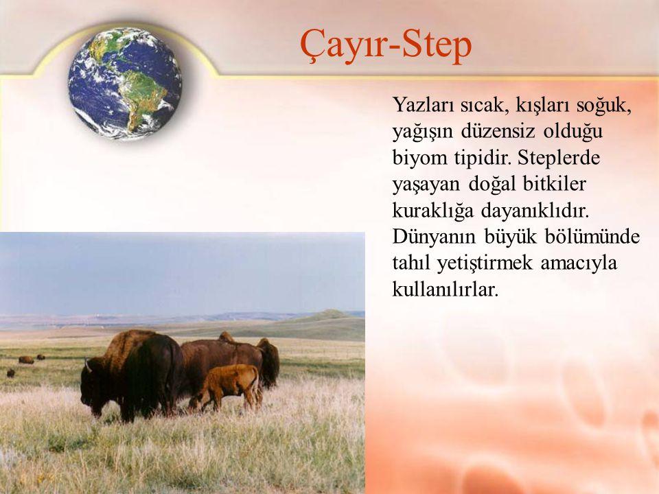 Çayır-Step