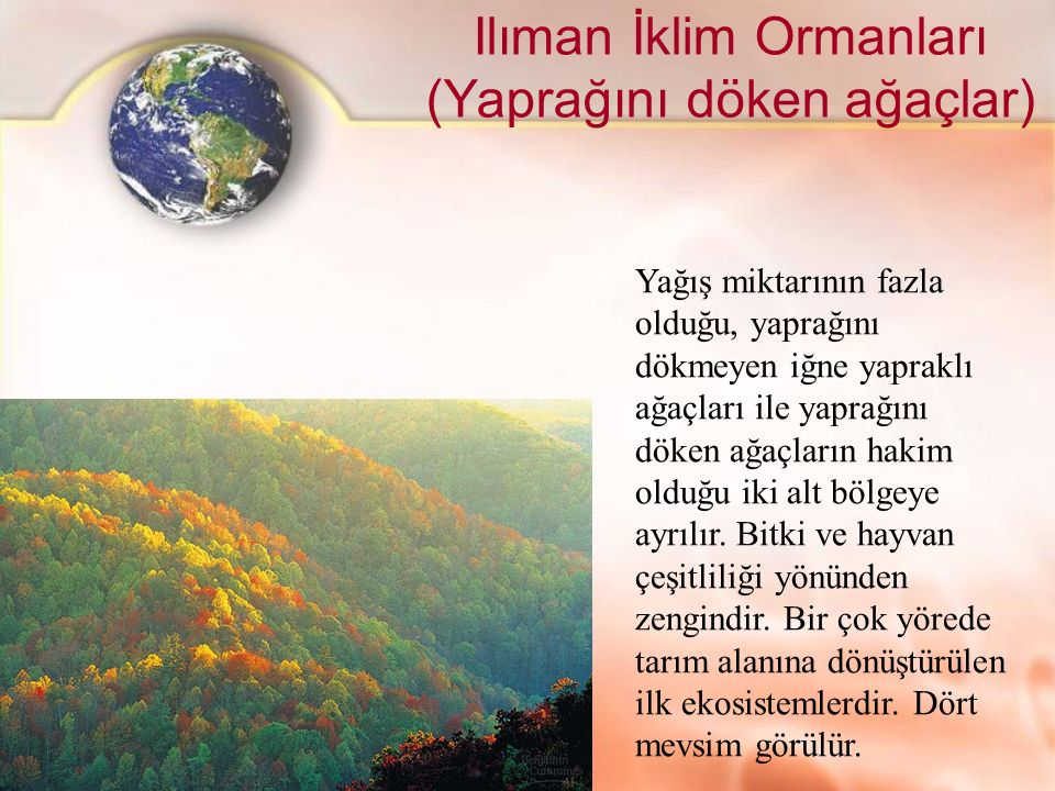 Ilıman İklim Ormanları (Yaprağını döken ağaçlar)