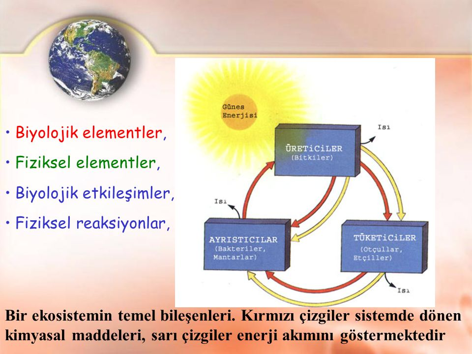 Biyolojik elementler, Fiziksel elementler, Biyolojik etkileşimler, Fiziksel reaksiyonlar,
