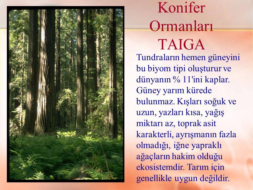 Konifer Ormanları TAIGA