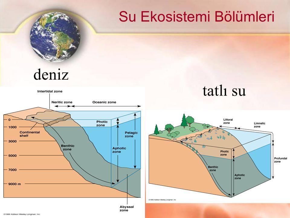Su Ekosistemi Bölümleri