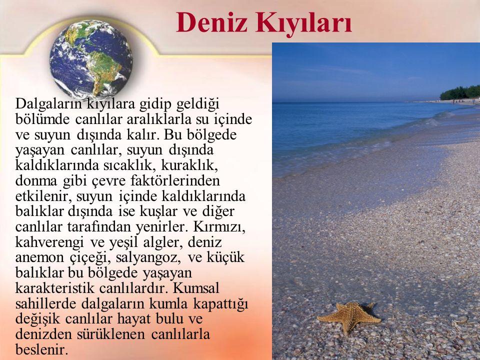 Deniz Kıyıları