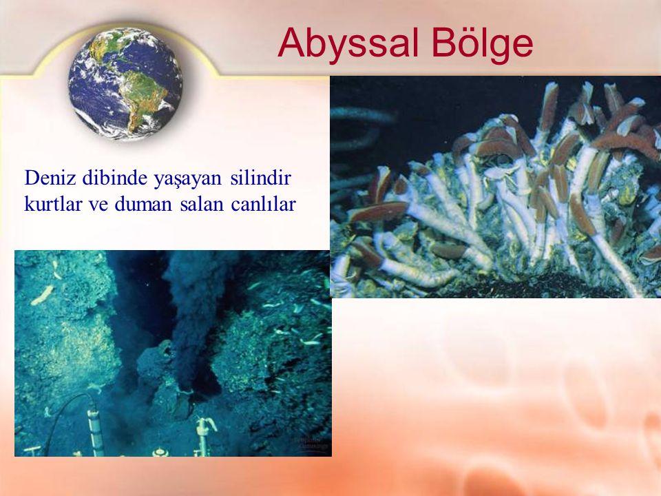 Abyssal Bölge Deniz dibinde yaşayan silindir kurtlar ve duman salan canlılar