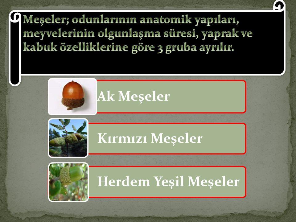 Meşeler; odunlarının anatomik yapıları, meyvelerinin olgunlaşma süresi, yaprak ve kabuk özelliklerine göre 3 gruba ayrılır.