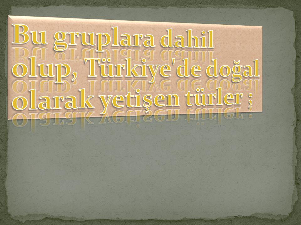 Bu gruplara dahil olup, Türkiye de doğal olarak yetişen türler ;