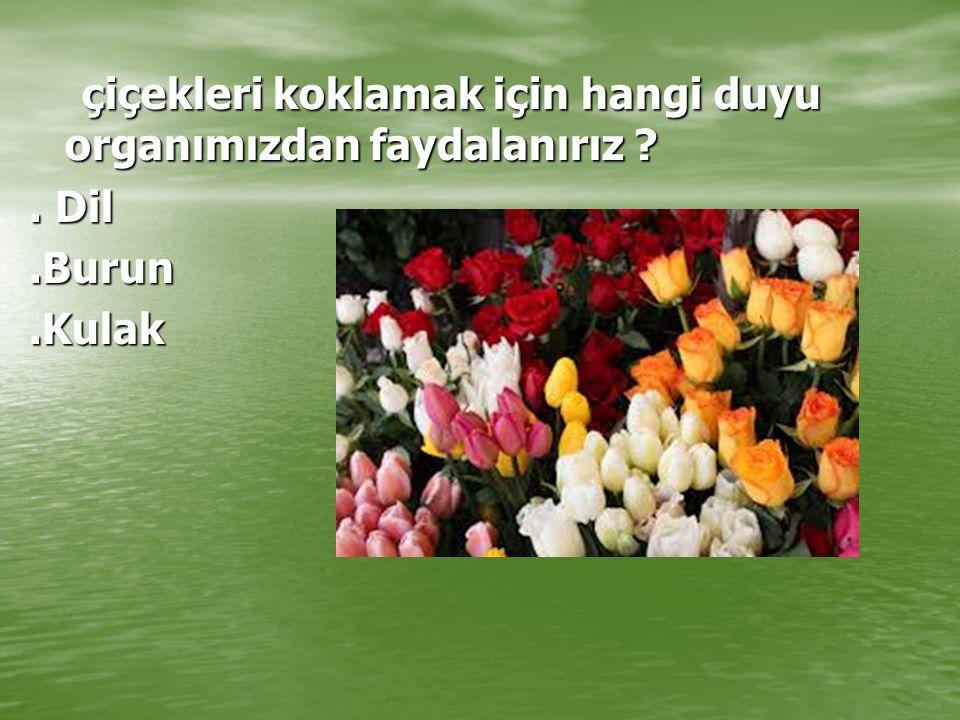 çiçekleri koklamak için hangi duyu organımızdan faydalanırız