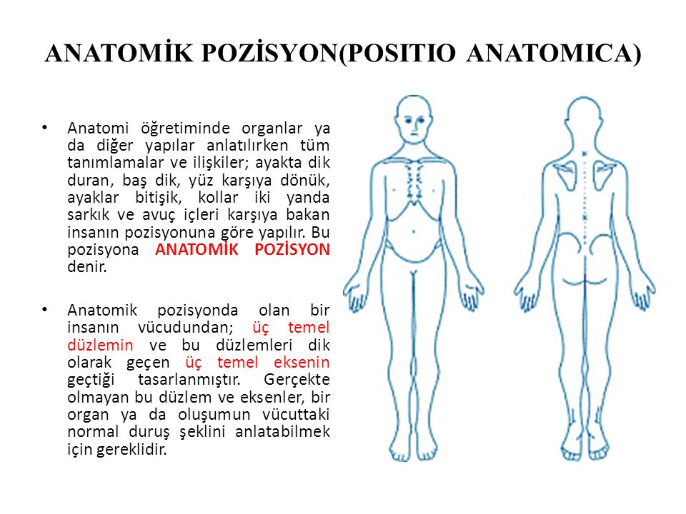 ANATOMİK POZİSYON(POSITIO ANATOMICA)