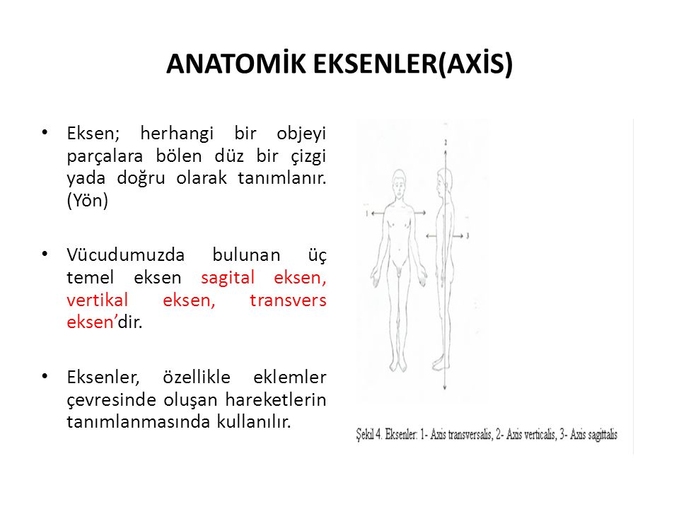 ANATOMİK EKSENLER(AXİS)
